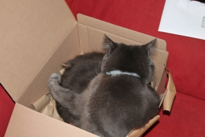 Cat in a box!