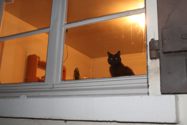 Mitzy at window.JPG